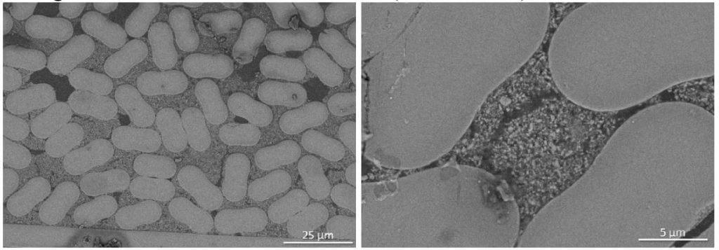 Figure 8: SEM Images of DF-24-8-10k OxOx CMC (10,000 Denier)
